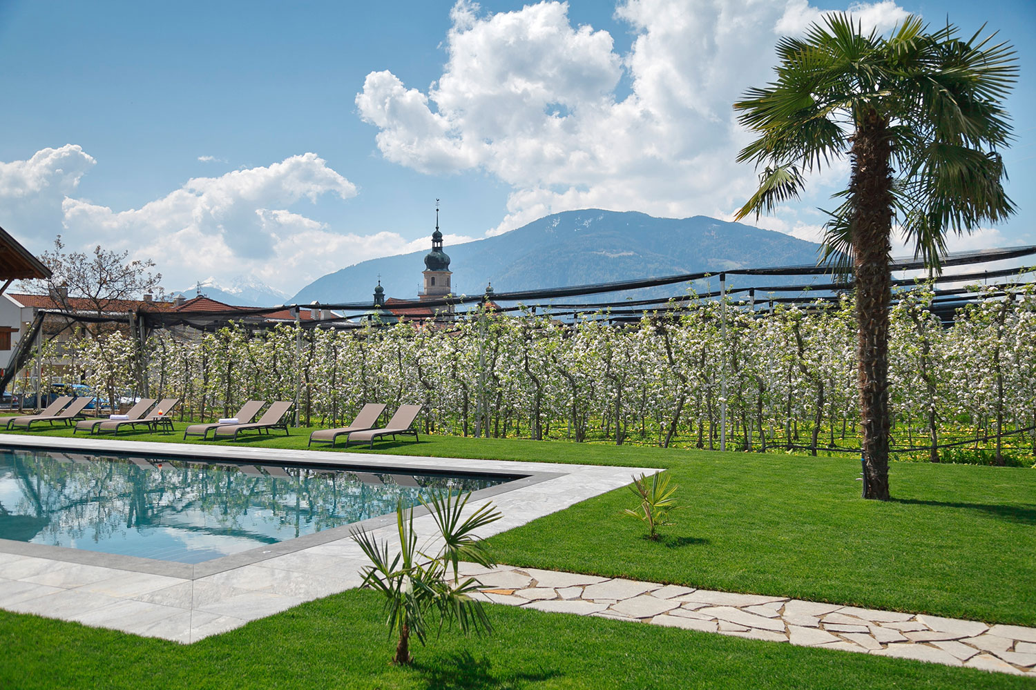 Our swimming pool immersed in the orchards